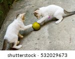 Stock photo kittens playing with a ball 532029673
