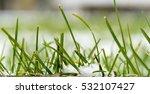 Green Grass Under The Snow
