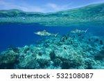 underwater blacktip reef sharks ... | Shutterstock . vector #532108087