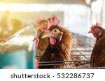 brown chicken egg or hen in the ... | Shutterstock . vector #532286737