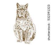 vector antique engraving...   Shutterstock .eps vector #532391323
