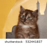 curious kitten on a chair... | Shutterstock . vector #532441837