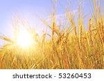 Crop Of Rye   Golden Cereal An...