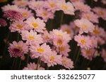 chrysanthemum flower | Shutterstock . vector #532625077