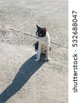 Small photo of Black-an-white alley cat staring at the street.