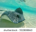 Stingray At The Sandbar In...