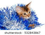 Small photo of funny Abyssinian Kitten plays with a blue tinsel on a white background, kitty tangled in trumpery