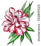 red white ginger tropical... | Shutterstock . vector #532845523