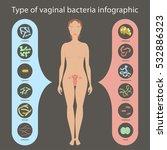 gynecology vector illustration. ... | Shutterstock .eps vector #532886323