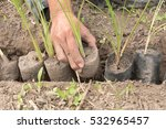 planting a tree. close up on... | Shutterstock . vector #532965457