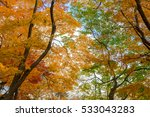 autumn color in japan | Shutterstock . vector #533043283