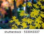autumn color in japan | Shutterstock . vector #533043337