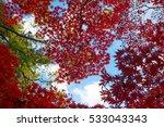 autumn color in japan | Shutterstock . vector #533043343