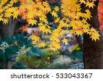 autumn color in japan | Shutterstock . vector #533043367
