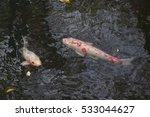 gold carp in lake | Shutterstock . vector #533044627