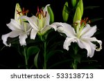 close up of white lily flowers. ... | Shutterstock . vector #533138713