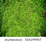 Moss In A Summer Forest On A...