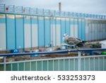 Seabird   Seagull   On The...