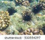 Tropical Sea Urchin On Sand Se...