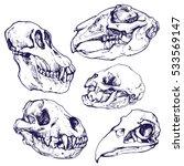 Animals Skulls Sketch Set...