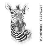 zebra on white background.... | Shutterstock . vector #533641297