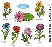 vector set of flowers  color... | Shutterstock .eps vector #533689567