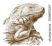 vector antique engraving... | Shutterstock .eps vector #533895247