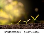 the seedling are growing in the ... | Shutterstock . vector #533933353