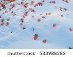 Red Maple Leaf  Acer Palmatum ...