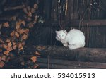 Old White Cat Sitting On Logs...