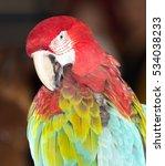 beautiful parrot circus | Shutterstock . vector #534038233