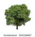 isolated tree on white