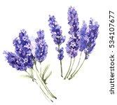 wildflower lavender flower in a ... | Shutterstock . vector #534107677