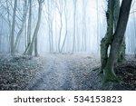 Footpath Through Winter Forest...
