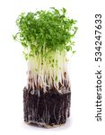 cress sprouts isolated on white  | Shutterstock . vector #534247633