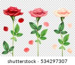 Stock vector three beautiful red and pink roses and petals set isolated on transparent background realistic 534297307