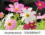 Beautiful Blooming Flowers In...