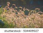 grassland | Shutterstock . vector #534409027