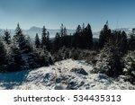 winter. beautiful pine forest... | Shutterstock . vector #534435313