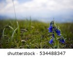 Mountain Flowers Bellflower...