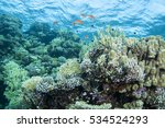 Abstract Underwater Scene Of...