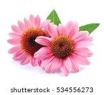 echinacea flowers close up... | Shutterstock . vector #534556273