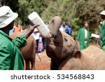 orphaned elephant being fed in... | Shutterstock . vector #534568843