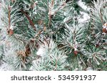 Green Pine Tree Covered By Sno...