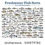fish sorts and types. various... | Shutterstock .eps vector #534979783