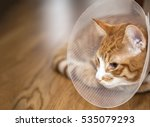 Image Of Cat With Cone Lying O...