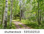 forest tourist routes in russia....   Shutterstock . vector #535102513