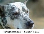 my spotted dog | Shutterstock . vector #535547113