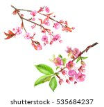 set of spring blossom  bloom  ... | Shutterstock . vector #535684237