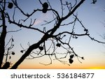 branch with apples without... | Shutterstock . vector #536184877